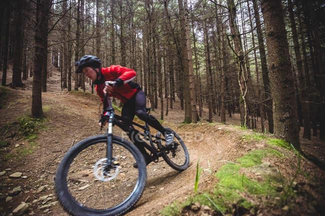 Езда на велосипеде по грунтовой дороге в лесу — стоковое фото
