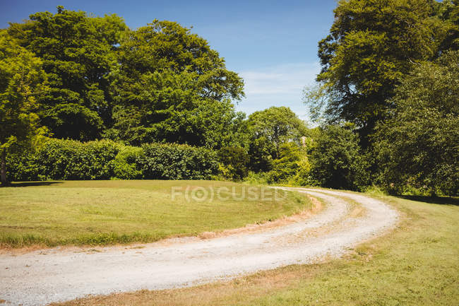 Dirt track in countryside field and trees in daylight — Stock Photo