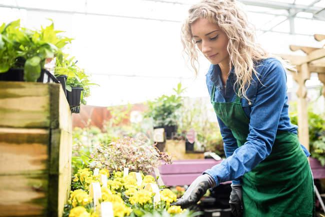Female florist checking flowers in garden centre — Stock Photo