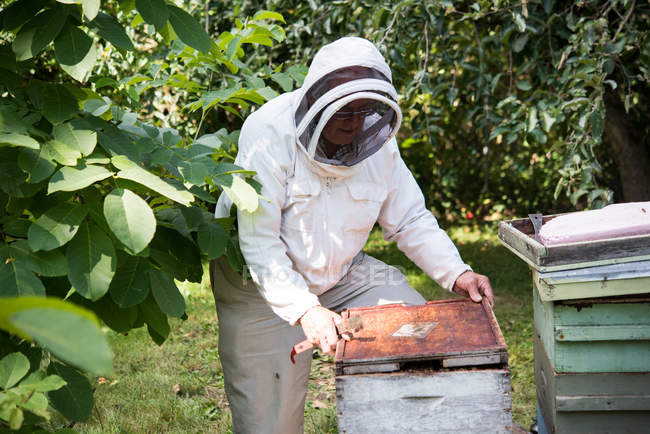 Beekeeper cleaning bee frame in apiary garden — стоковое фото