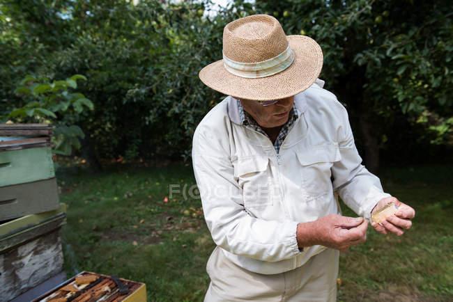 Apiculteur tenant la cage en bois de la reine dans le jardin de rucher — Photo de stock