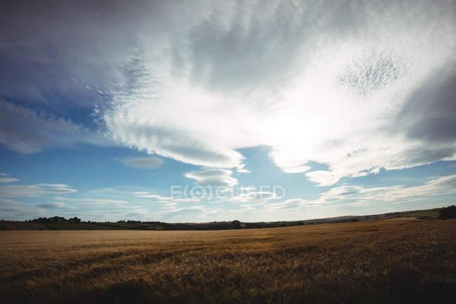 Vista del campo e del cielo in campagna — Foto stock