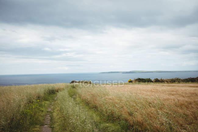 Вид на море с поля в пасмурный день — стоковое фото