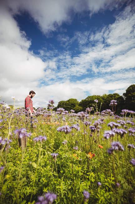 Apicoltore guardando alveare nel campo di fiori — Foto stock
