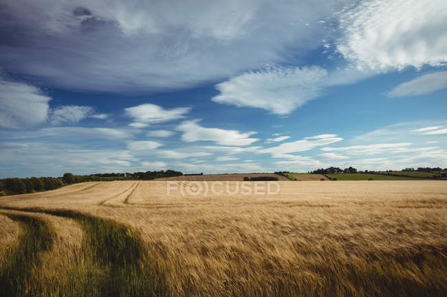 View of field and sky at countryside — Stock Photo
