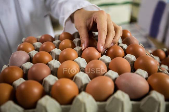Обрезанное изображение женского персонала, изучения яйца яйцо фабрике — стоковое фото