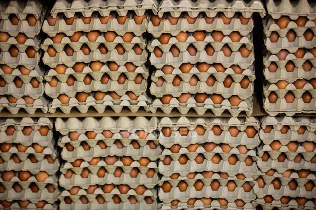 Cartons d'oeufs disposés en plateau dans l'usine d'oeuf — Photo de stock