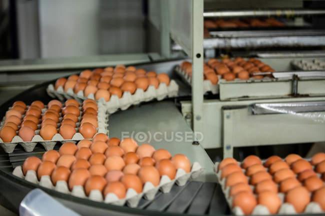 Картонные коробки яиц, движущихся на производственной линии на заводе — стоковое фото