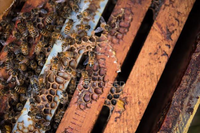 Заделывают пчел на рамку Сота — стоковое фото