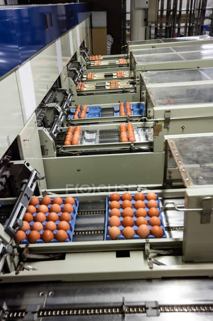 Eggs moving on production line in factory — Stock Photo