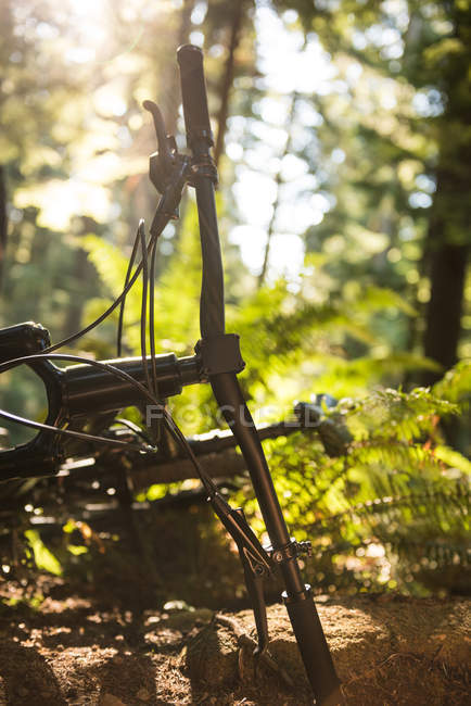 Close-up of bicycle in forest in sunlight — стоковое фото