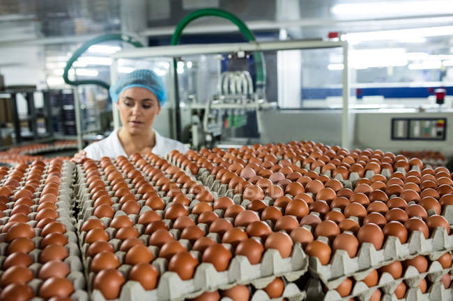 Attentive female staff examining eggs in factory — Stock Photo
