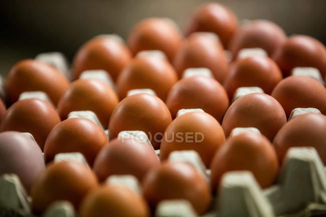 Закри яйця розташовані в яйці картону — стокове фото