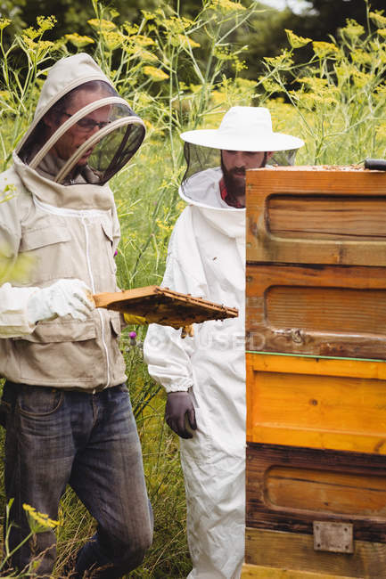 Beekeepers holding and examining beehive in field — стоковое фото
