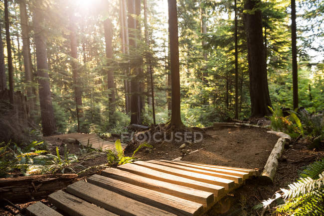 Wooden path in green woodland in sunlight — Stock Photo