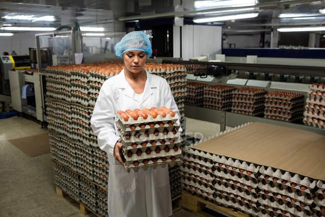 Портрет жіночий персонал, тримаючись за яєчні лотки заводу — стокове фото