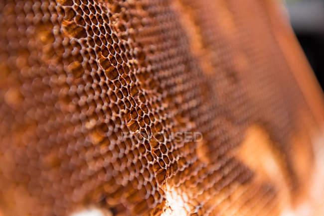 Nahaufnahme der Wabe in einer Holzkiste — Stockfoto