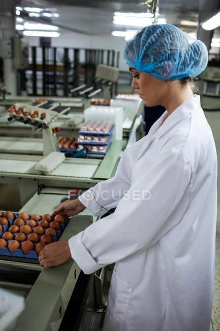 Женщины ставят на конвейер коробку с яйцами на яйцефабрике — стоковое фото