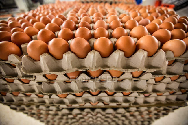 Стек коробки з яйцями заводі — стокове фото