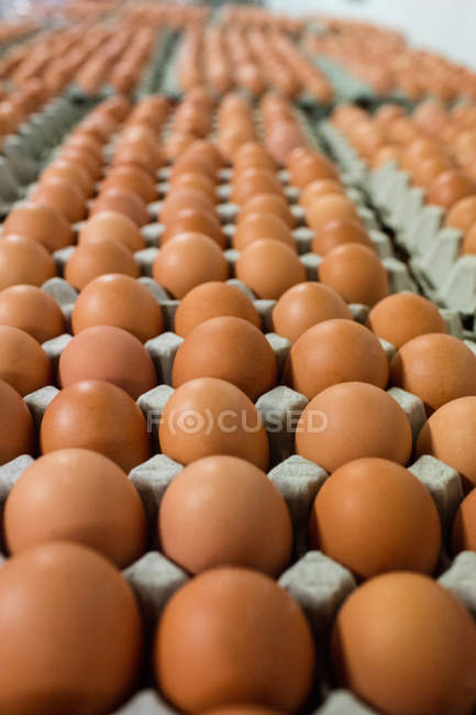 Eggs arranged in egg cartons in egg factory — Stock Photo