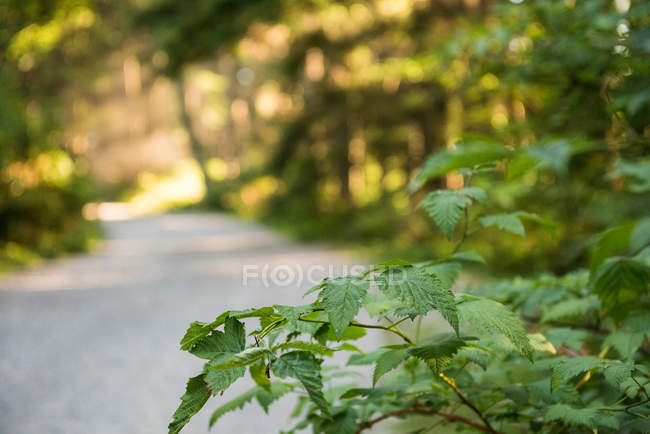 Close-up of green leafy plant in sunlight in woodland — Stock Photo