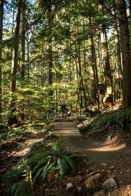 Cycliste masculin en forêt par une journée ensoleillée — Photo de stock