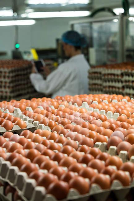 Empilement de cartons avec des œufs en usine — Photo de stock