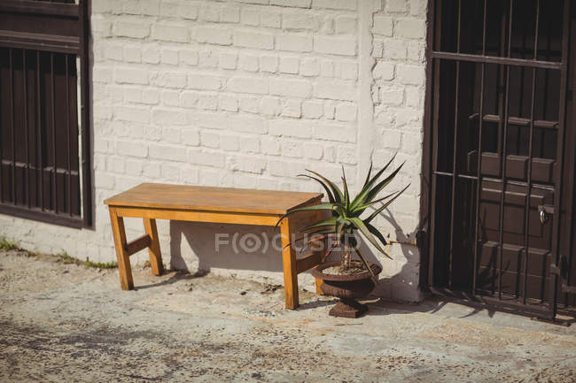 Potted plant and wooden bench near brick wall at sunny day — Stock Photo