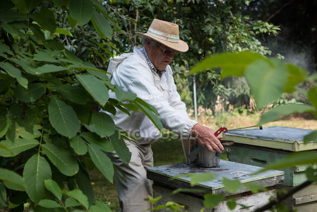 Side view of beekeeper in apiary garden — Stock Photo
