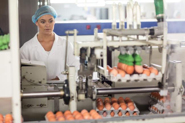 Персонал женского пола осматривает яйца на конвейерной ленте на яйцефабрике — стоковое фото