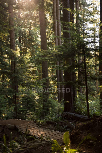 Scenic view of beautiful green forest trees in sunlight — Stock Photo