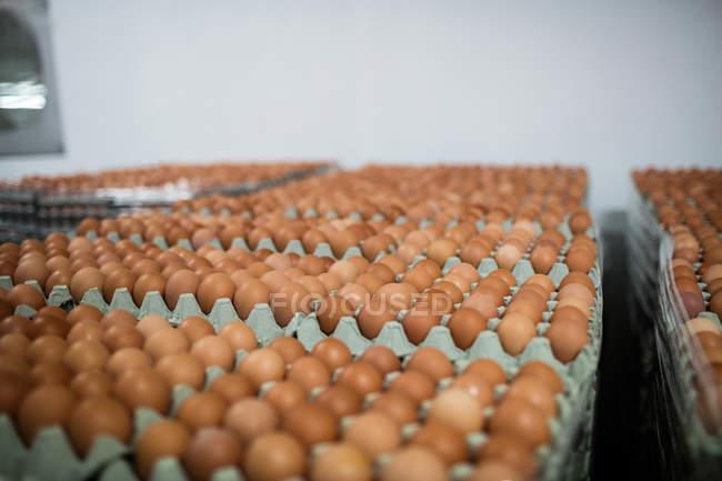 Oeufs disposés sur des cartons d'oeufs dans l'usine d'oeuf — Photo de stock