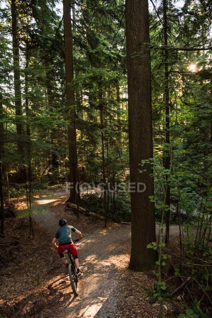 Vue arrière du cycliste masculin en forêt par une journée ensoleillée — Photo de stock