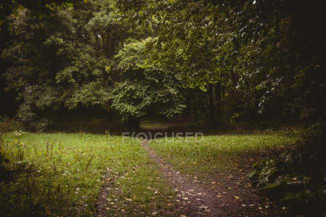 Перегляд зеленим лісом протягом дня — стокове фото
