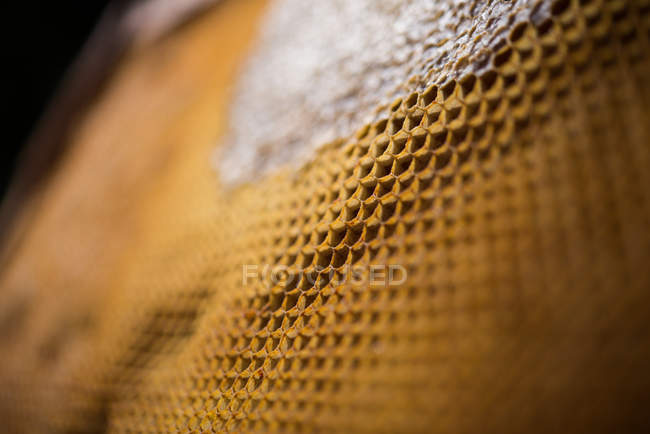 Gros plan du nid d'abeille rempli de miel — Photo de stock