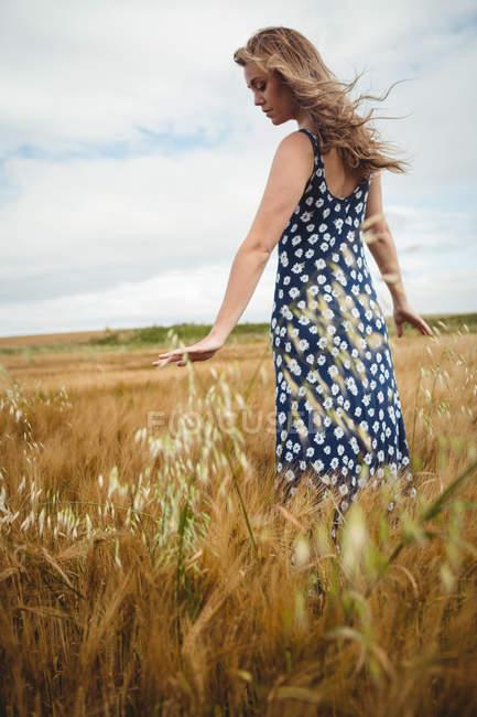 Mulher bonita tocando trigo no campo — Fotografia de Stock