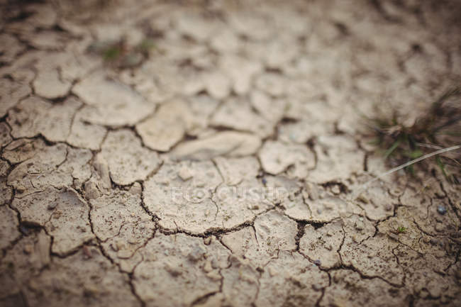 Close up of dry brown cracked ground — Stock Photo