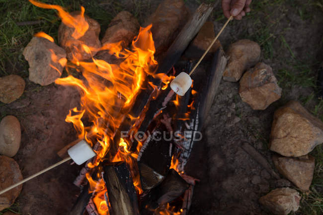 Close-up of roasting marshmallow on campfire — Stock Photo