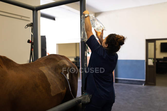Rear view of female surgeon examining a horse in hospital — Stock Photo