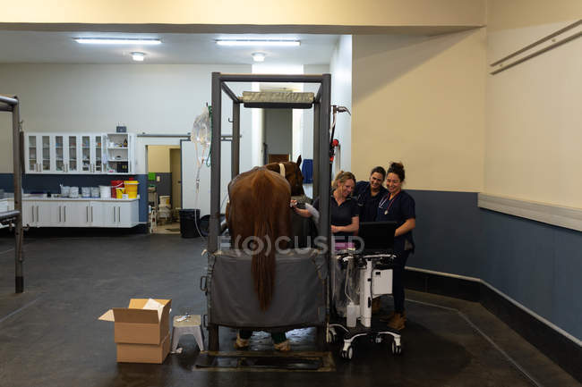 Group of female surgeons examining a horse in hospital — Stock Photo