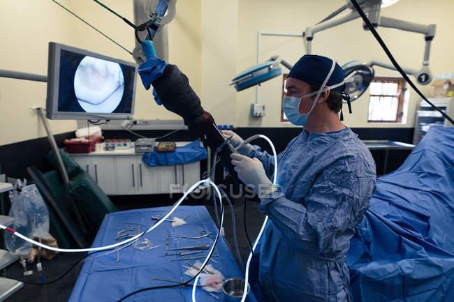 Хирург работает лошадь в театре операции в больнице — стоковое фото