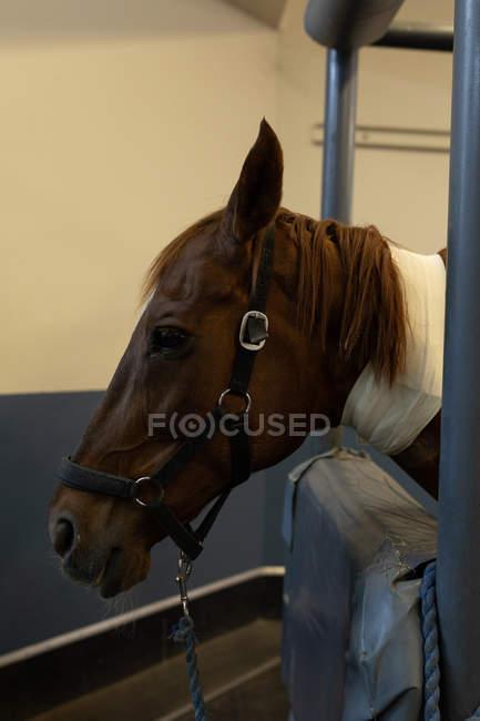 Крупным планом раненых лошади в больнице — стоковое фото