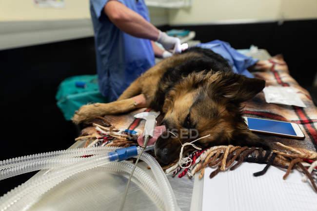 Chirurg operiert Hund im Operationssaal der Tierklinik — Stockfoto