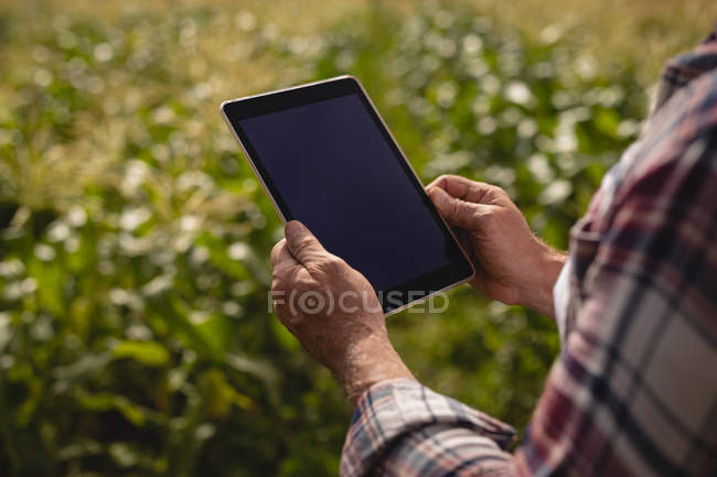 Over the shoulder view of male farmer using digital tablet while standing in a corn field at farm on a sunny day — Stock Photo