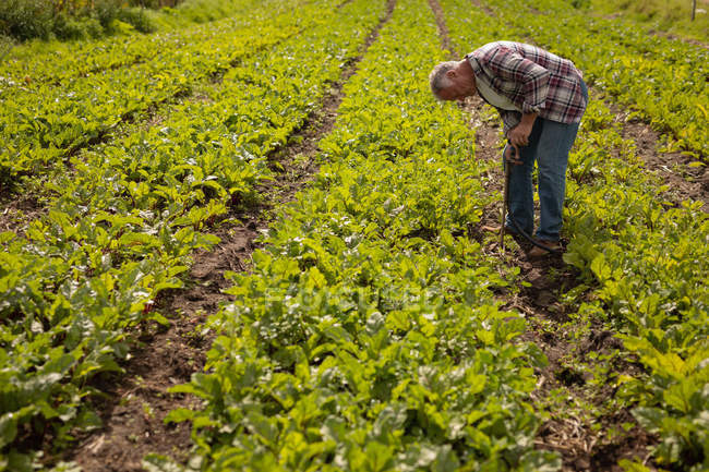 Side view of senior Caucasian male farmer repairing valve pipe on the field in farm on a sunny day — Stock Photo