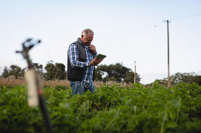 Front view of thoughtful senior Caucasian male farmer using digital tablet while standing in radish field at farm — Stock Photo