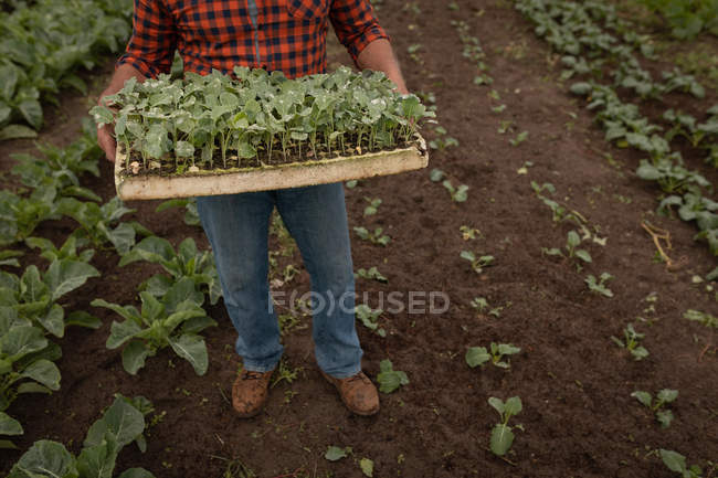 Low section of male farmer holding a basket full of the harvest from the farm — Stock Photo