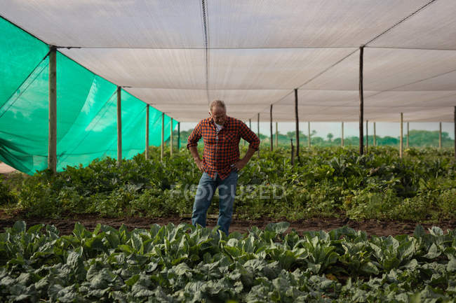 Front view of a thoughtful senior Caucasian male farmer standing on the field in the greenhouse at farm — Stock Photo