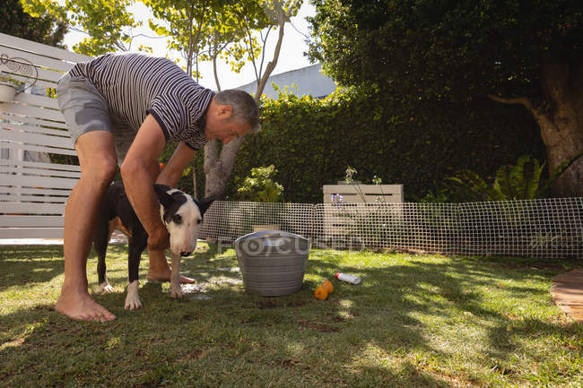 Side view of Caucasian man cleaning his dog in the garden — Stock Photo