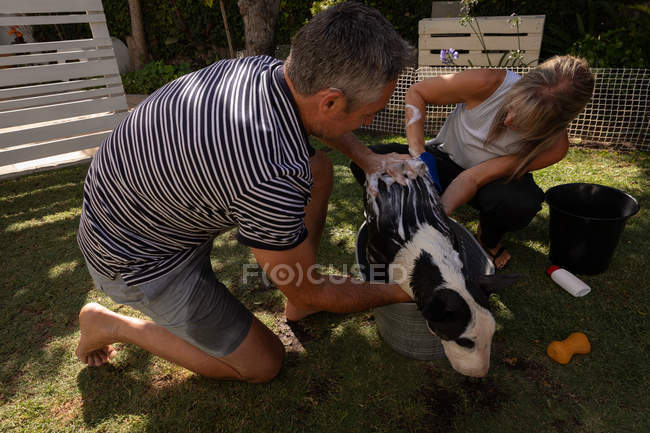 Vista lateral do casal caucasiano maduro limpando seu cão no jardim — Fotografia de Stock